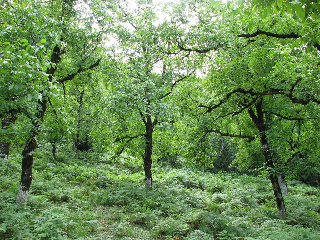 Заповедный лес