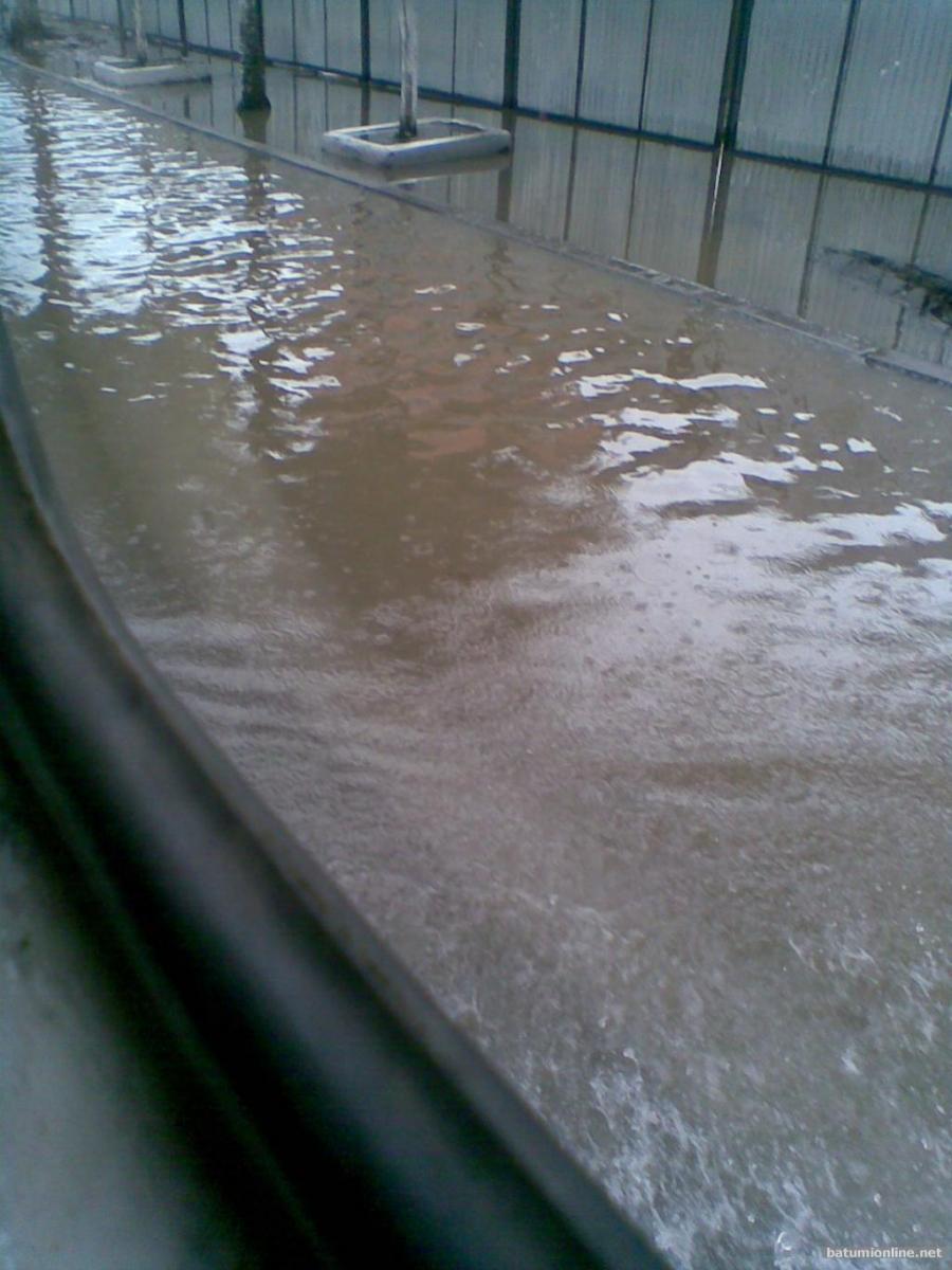 Вплавь по улице Чавчавадзе
