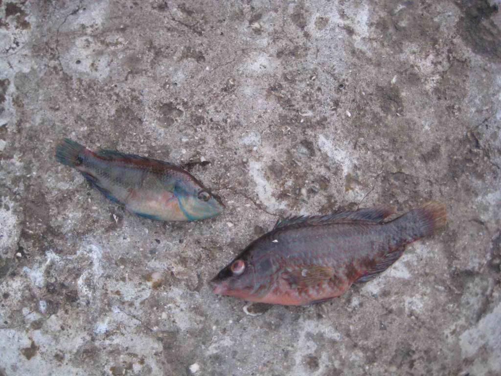 мелкая рыбешка