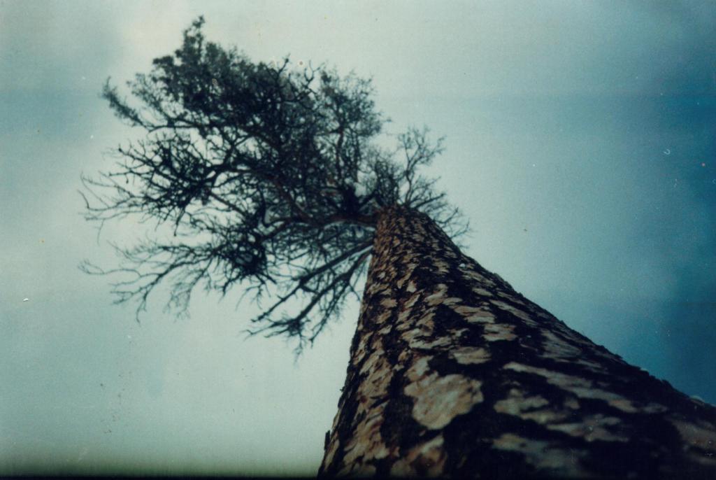 ASPIRATION (cтремление). Батуми. 2002. from Jara.