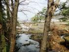 Земельный участок в роще у реки